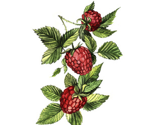 fruit, raspberries, and red image
