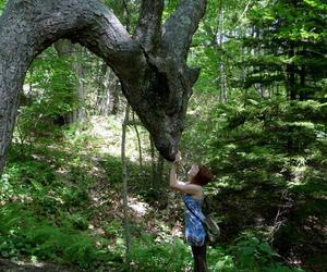 dragon, nature, and tree image