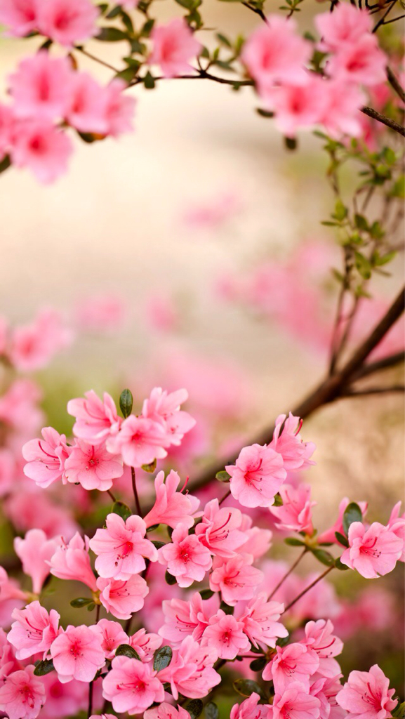 background, flowers, and pretty image
