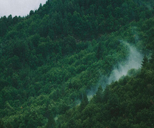 adventure, forest, and hipster image