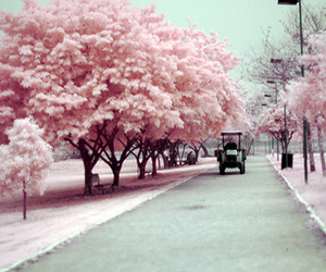 photography, pretty, and tree image
