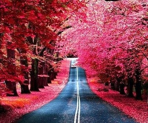 beautiful, road, and travel image