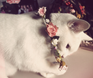 kitty, rose, and photography image