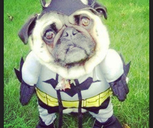 dog, funny, and batman image