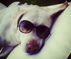 dog, lunettes, and sun image