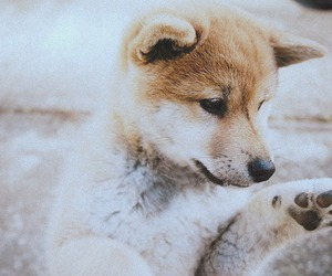 adorable, cut, and paws image