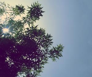 beautiful, green, and sky image