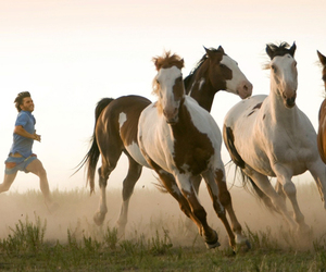 horse, into the wild, and wild image