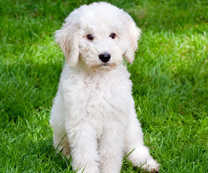 adorable, curly, and OMG image
