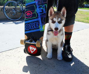 dog, photography, and skate image