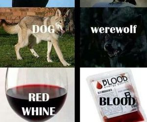 blood, tvd, and the vampire diaries image