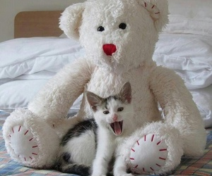 cat, kitten, and funny image