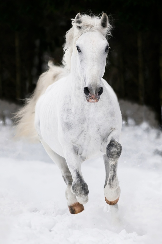White Horse Jumping And Running Horses On We Heart It