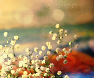 flowers and summer image