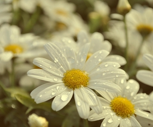 droplets, flower, and yellow image