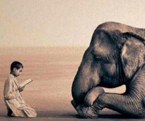 elephant, boy, and animal image
