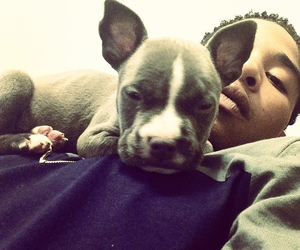 puppy, mindless behavior, and cute image