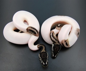 snake and animal image