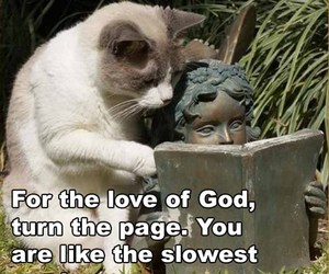 cat, funny, and book image