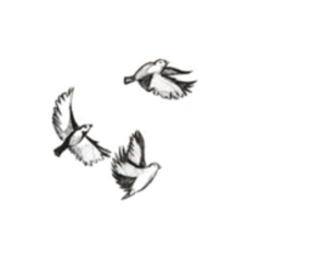 bird, black and white, and overlay image