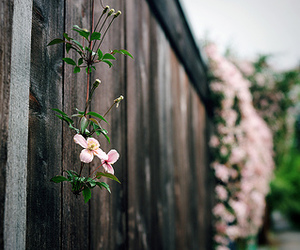 boho, pretty, and flower image