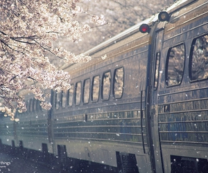 train, flowers, and tree image