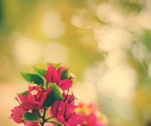 50mm, pink, and bokeh image