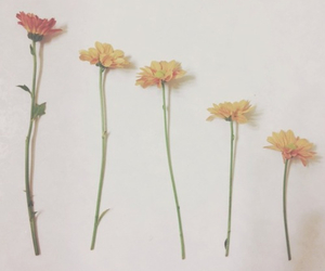 flowers, indie, and grunge image