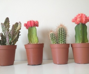 cactus, nature, and grunge image