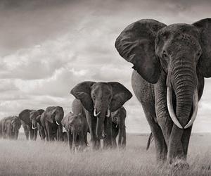 elephant, animal, and photography image