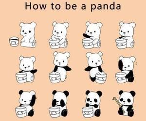 panda, cute, and funny image