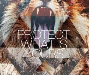 lion, protect, and quotes image