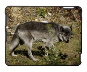 animal, mammal, and wildlife image