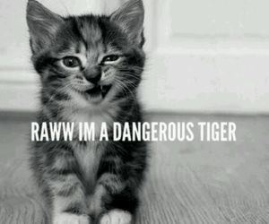 kitty, cute, and little tiger image