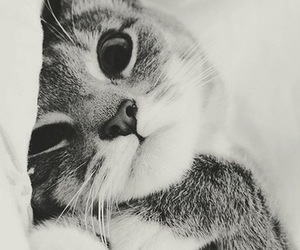 kitty, animals, and cat image