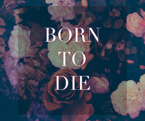 born to die, lana del rey, and die image