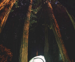 camping, trees, and light image
