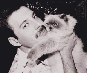 cat, Freddie Mercury, and Queen image