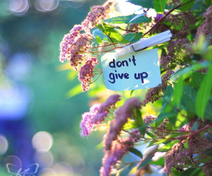 don't give up, flowers, and text image