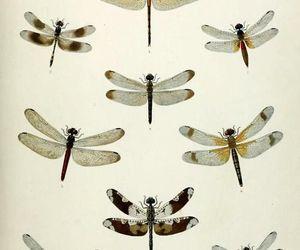 dragonflies image