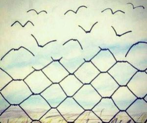 freedom, bird, and free image