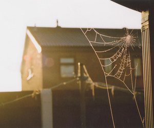 dew drops, sunrise, and city image