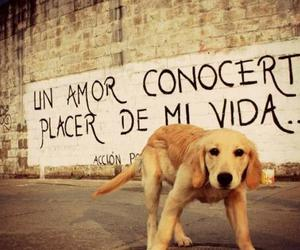 love, dog, and accion poetica image