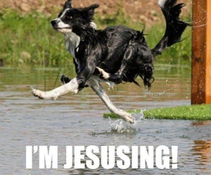 funny, dog, and jesus image