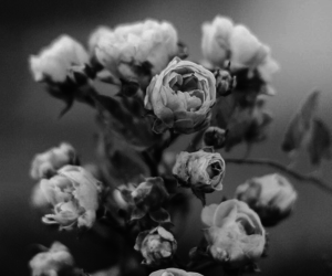 beautiful, flowers, and black and white image