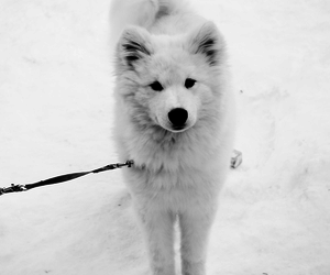 dog, black and white, and cute image