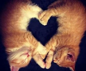 amour, chat, and animaux image