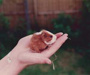 baby, hand, and guinea pig image
