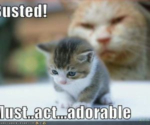 adorable, busted, and kitty image