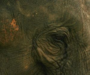 animal, Sri Lanka, and cute image